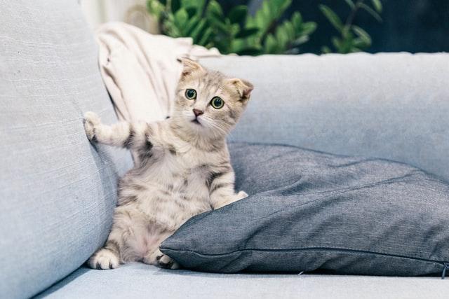 new kitten